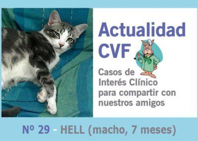 Orquiectomía felina (castración)