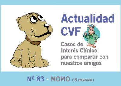 Fractura metacarpianos cachorro