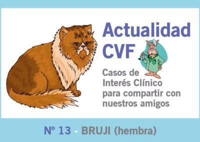 Sarcoma punto inyección felino